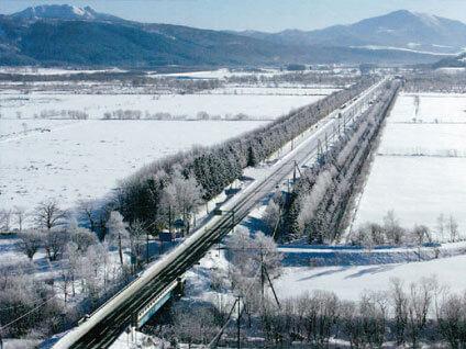 道路防雪林で吹雪を緩和します-写真イメージ