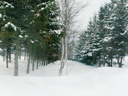 林帯の中に吹雪を捕捉します-写真イメージ