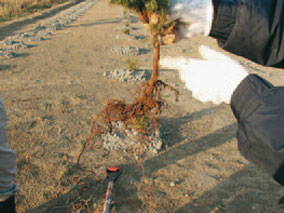 苗木育成不良の調査-写真イメージ