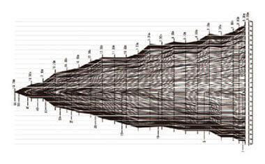 樹幹解析(年輪)-写真イメージ