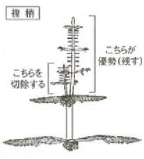 複梢と整理の方法-写真イメージ