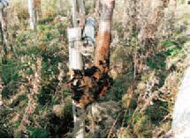 深植えと強い根切り植栽による防雪林-写真イメージ