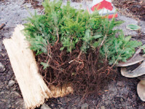 植樹会の実施-写真イメージ2