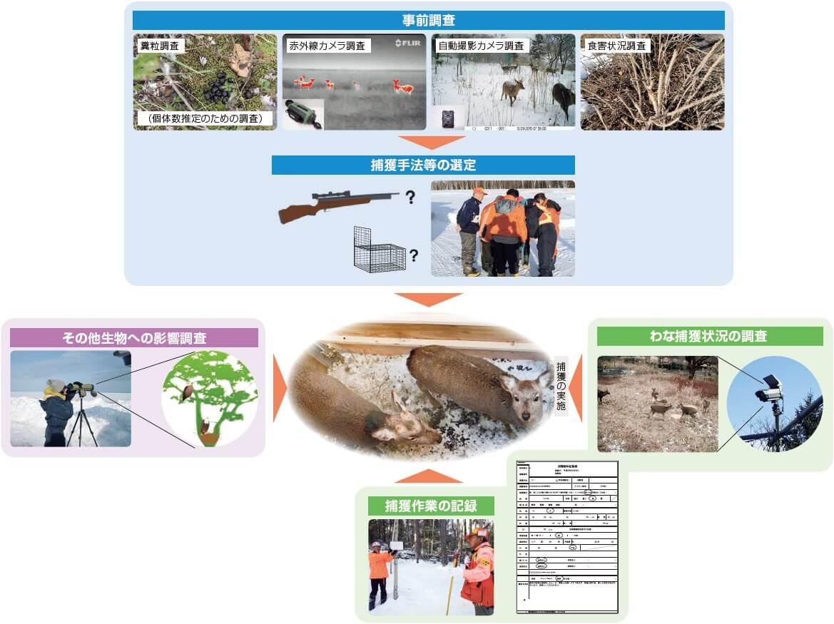 事前調査/捕獲手法等の選定/わな捕獲状況の調査/捕獲の実施/捕獲作業の記録/その他生物への影響調査